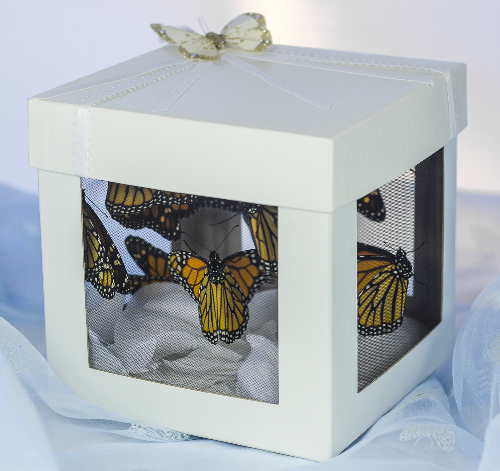 See Through Butterfly Box