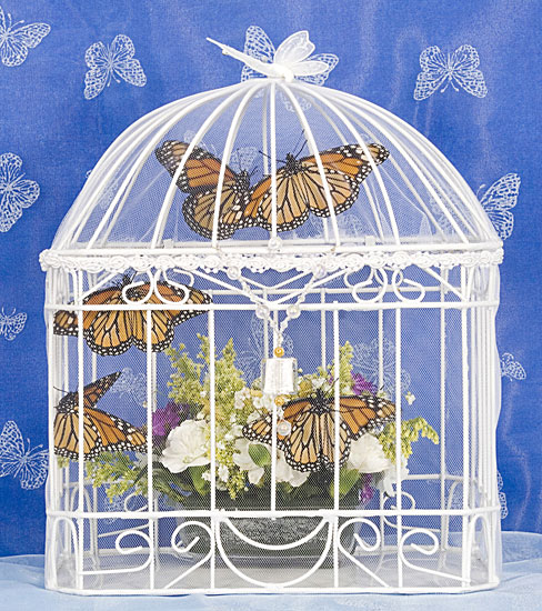 Butterfly Cottage from FlutterbyGardens.com